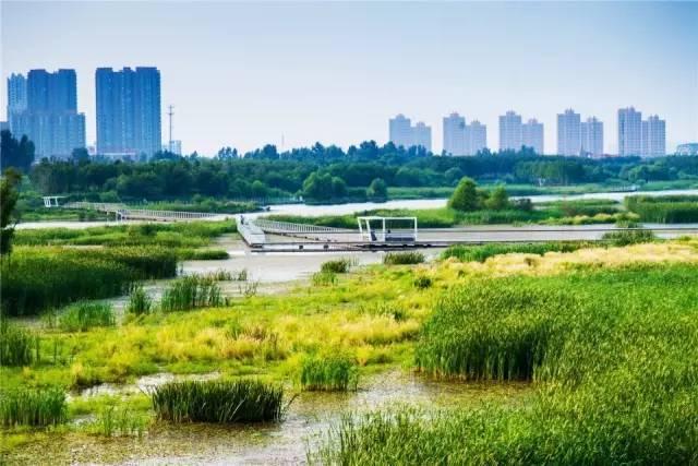 """从""""海绵城市""""到""""蔓藤城市"""",景观设计要修复国土,造秀美山川_18"""