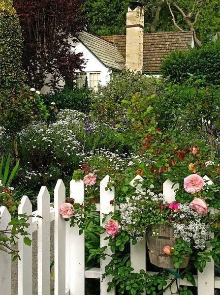 你真正需要的,也许只是一个小院,看繁花爬满篱笆_17
