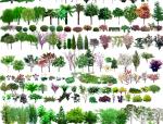 常用园林植物图例(CAD平面图+PSD立面图)