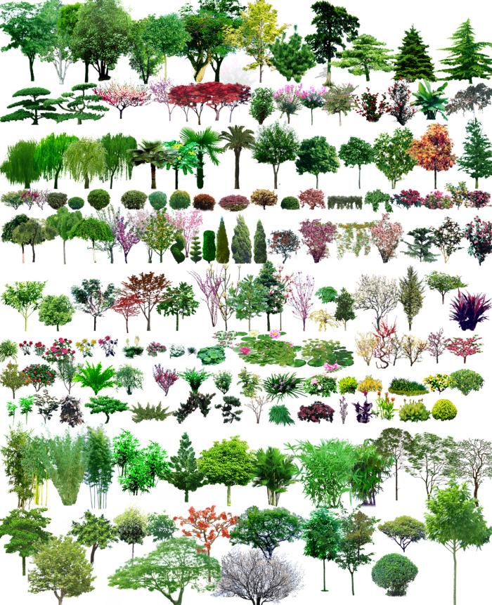 常用园林植物图例(CAD平面图+PSD立面图)-园林植物图例
