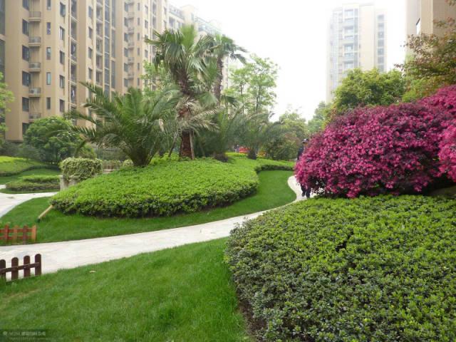 植物设计中花卉灌木植物色块的应用处理_4