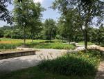 地被植物在城市景观设计中的巧妙应用,超实用!