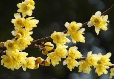 香花植物-嗅觉盛宴_36