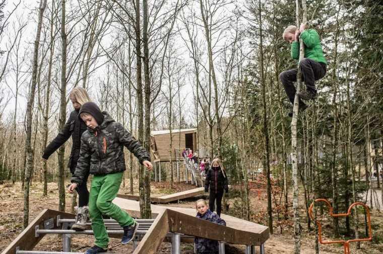 丹麦校园里的神奇树林景观-7