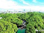 生态风景林建设中构建技术