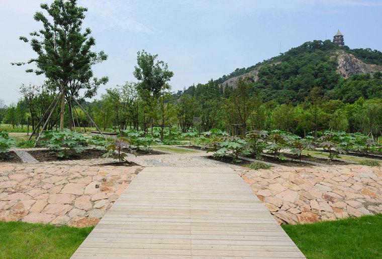 上海辰山植物园-2