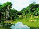 大自然巡礼 | 云南西双版纳热带雨林自然保护区