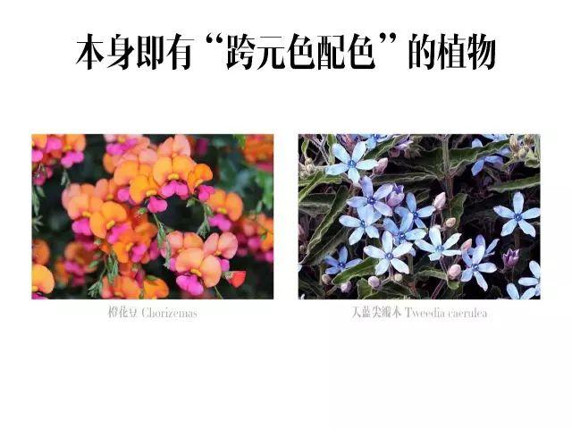 干货|庭院花园中的色彩搭配_19