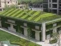 常见的立体绿化形式及与其相适宜的植物配置