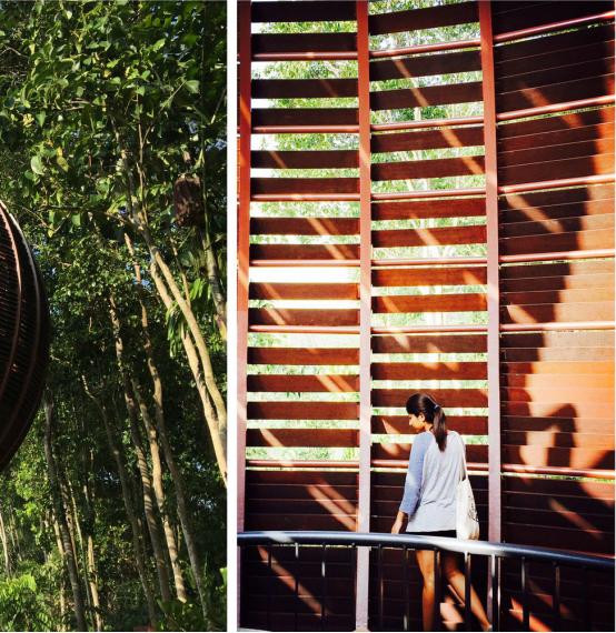 案例分享|新加坡双溪布洛湿地公园景观设计_5