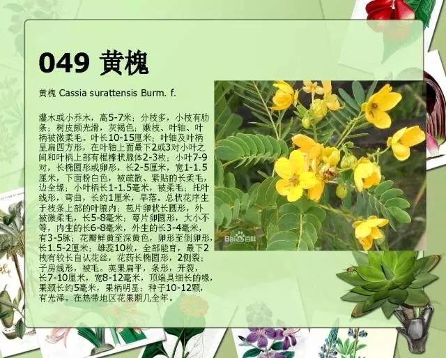 100种常见园林植物图鉴-20160523_183224_050.jpg