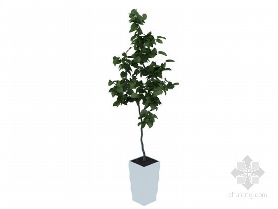 植物盆栽3D模型下载