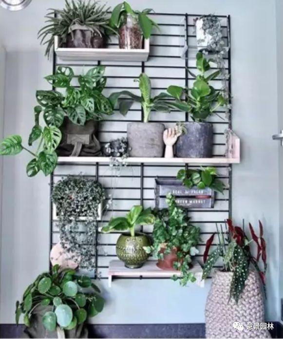 让治愈系绿植陪你度过漫长的秋冬岁月