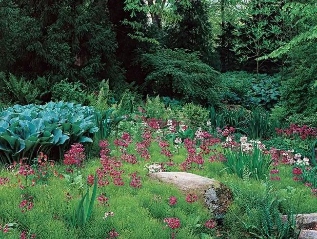 干货 景观地被植物的选择方式_12