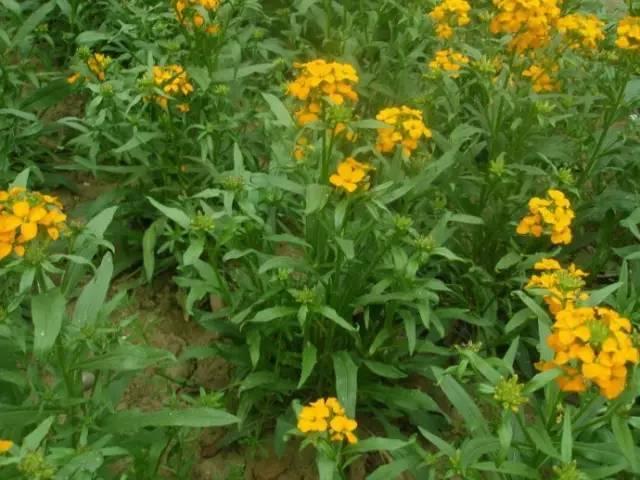 秋季要种的高颜值好养易活的植物界小公举!_4