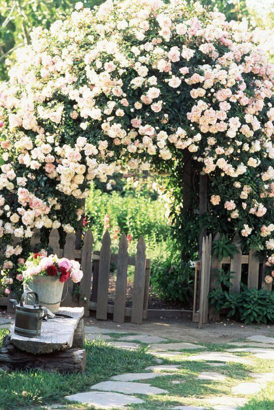 想要一个小院子,花开花落一辈子_33