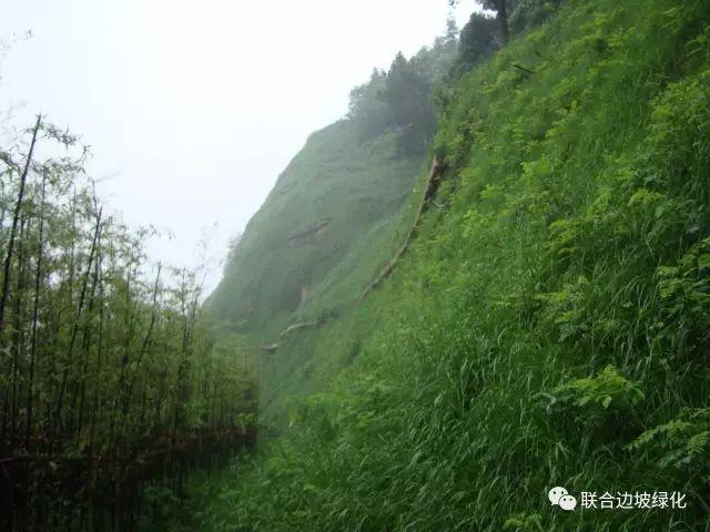 客土喷播边坡绿化施工方案