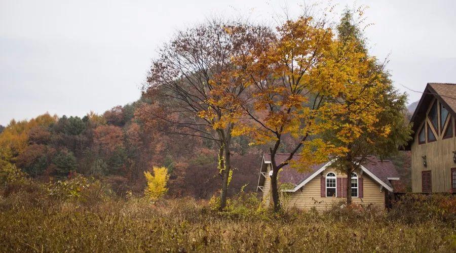 乡村民宿景观设计|要点_9