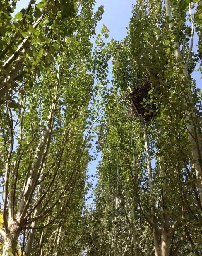 多彩观干植物,萧瑟的冬天里没有叶子照样成景!_12