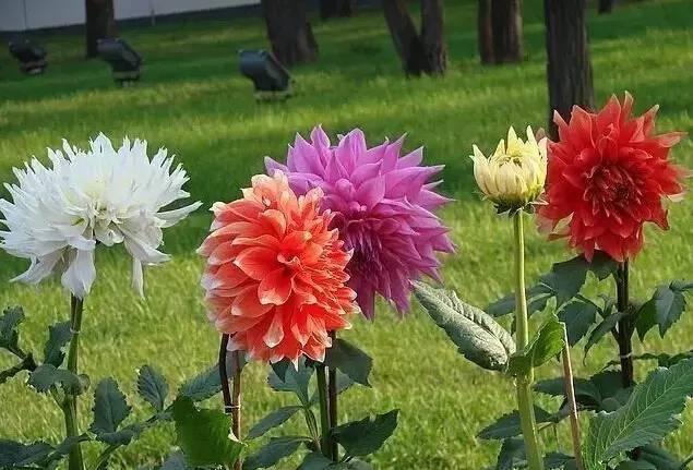 18种常见的镶边植物,你认识几种??_34