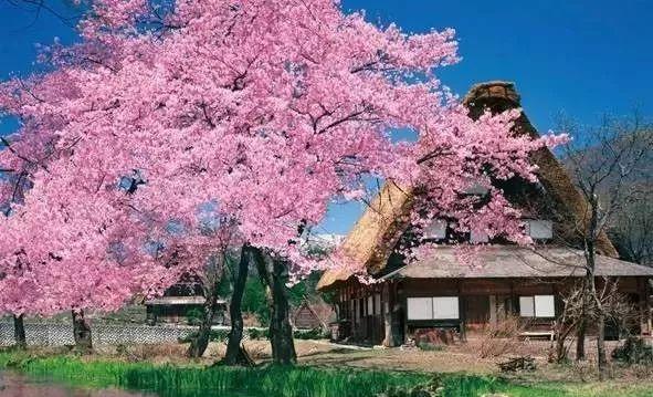 10个日本最美小镇_7