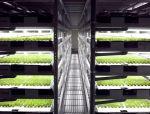 据说能喂饱地球97亿人,垂直农场为何这样厉害?到底有什么神奇?