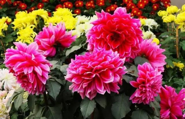 18种常见的镶边植物,你认识几种??_35
