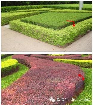 片植灌木:种植均匀,不漏土依设计要求修剪成直圆角