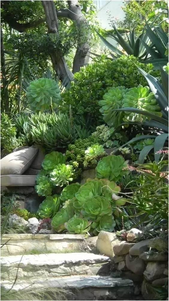 种满多肉的后院,原来比花园还美!_19