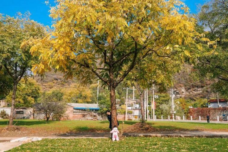 这里的秋天会画画,住进获国际大奖的最美民宿:姥姥家_4