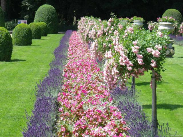 外国的园林艺术一定要看!_18