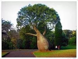 植物界的吉尼斯世界纪录大全-640.webp (36).jpg