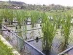 [广东]从化市街口街农村生活污水处理工程