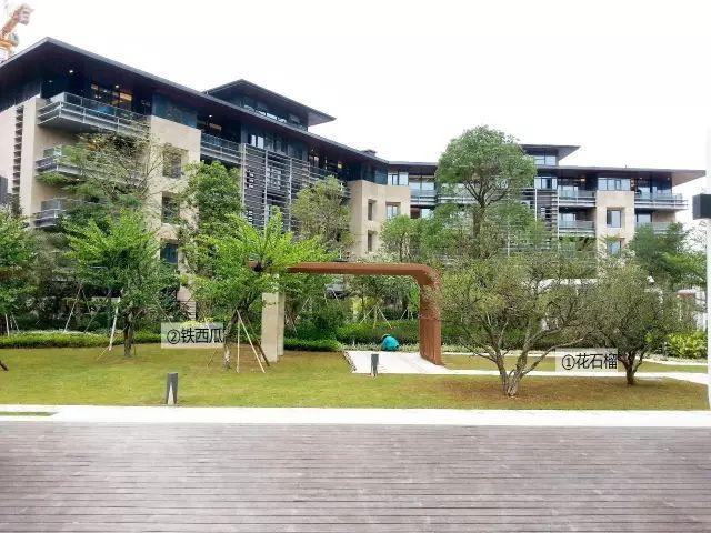 最详细图解:深圳湾三大豪宅景观植物配置!_13