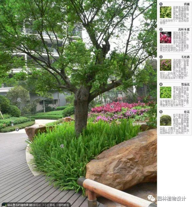 104组精彩植物配置案例(实景效果+植物品种)_30