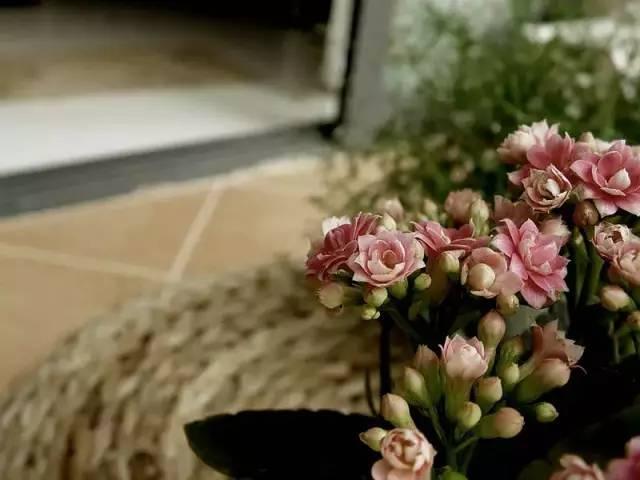想要这样一个阳台,过小日子,看花开_3