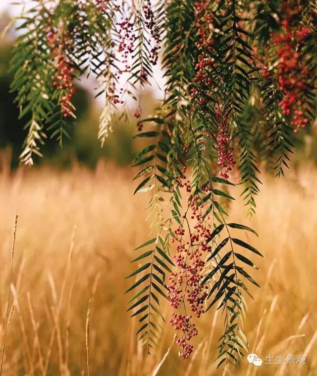 农业景观的意义_62