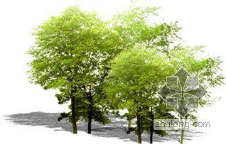 后期植物素材--树03
