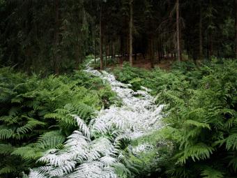 英国森林中的微妙轨迹艺术