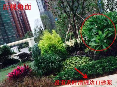 景观植物配置葵花宝典_84
