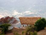 纯乡野棕榈棚 回应本土建筑空间