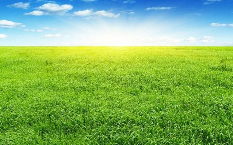 送您一股清新的田园风。_9