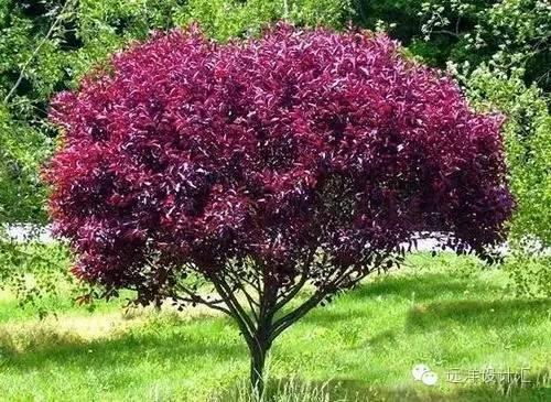 一个会种树的设计师,住宅每平方溢价3000元_17