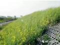 常见基坑支护及生态边坡支护形式特点分析!
