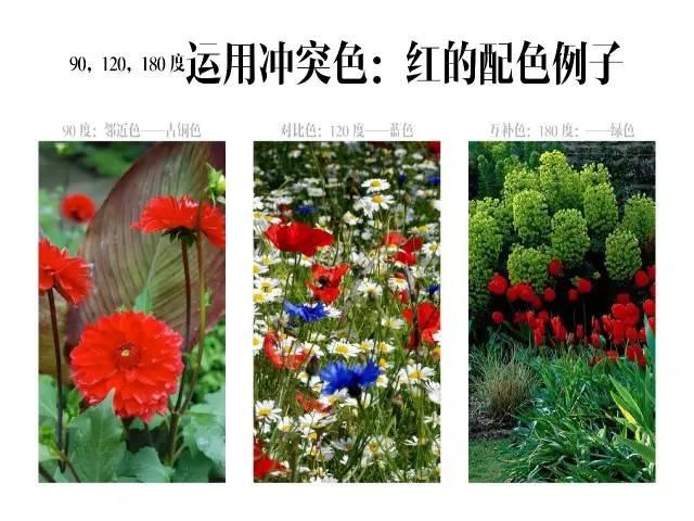 干货|庭院花园中的色彩搭配_10