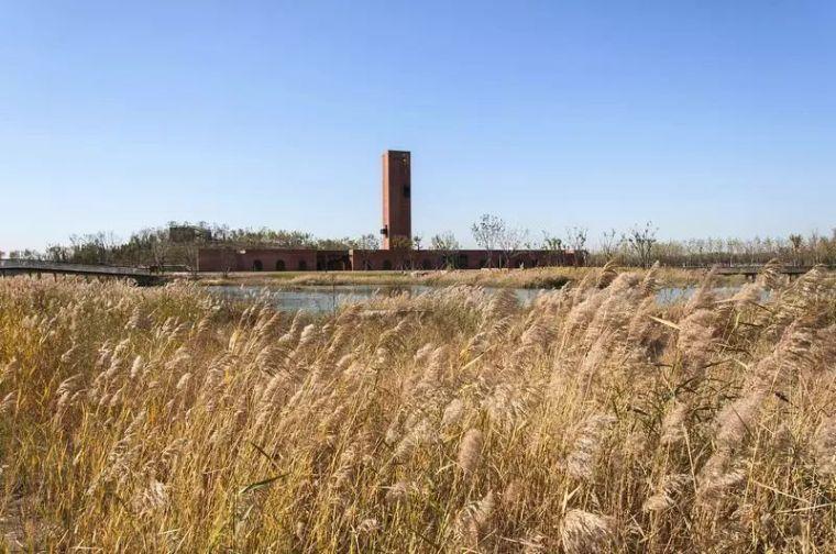 湿地中的红砖塔