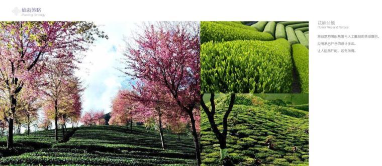 高端酒店景观设计——植物栽植策略