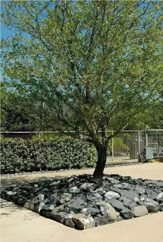 树池的配置方法和设计形式_23