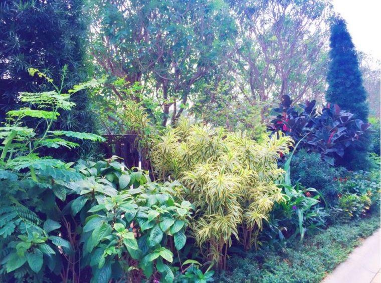 如何玩转植物造景之花镜_51