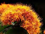 """这种叫""""无忧花""""的花你见过吗?"""